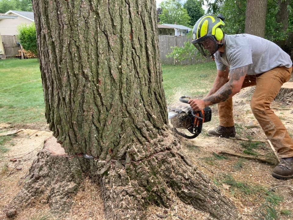 Remove your trees without damaging your property